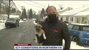 Cleaning icy cars – rescuing puppies – all in a day's work for FOX 5's Bob Barnard in Leesburg!