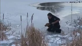 Heroic Texas firefighter rescues dog submerged in semi-frozen pond