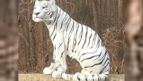 Did you see a white tiger on the side of the road in Montgomery County? You weren't the only one!