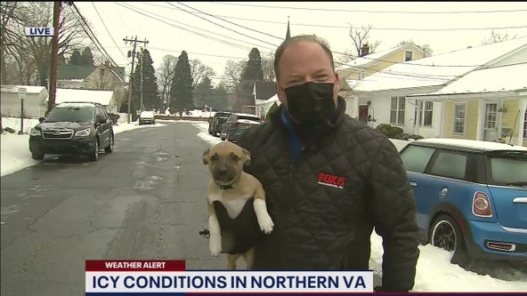 FOX 5 DC's Bob Barnard's adorable TV moment with puppy getting national attention