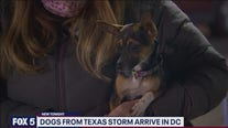 Dogs from Texas storm arrive in DC