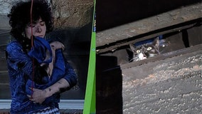 19-pound cat found trapped in neighbor's chimney for 4 to 5 days
