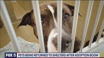 Pets being returned to shelters after adoption boom