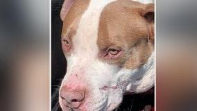 Manassas Park police ask public for help after dog found shot