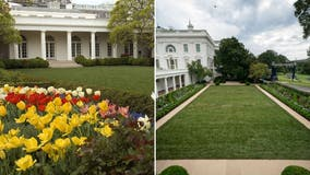 Petition created for First Lady Jill Biden to 'restore' White House Rose Garden