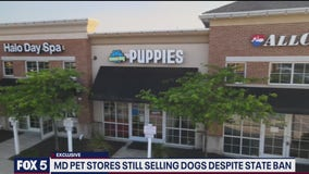 FOX 5 Exclusive: Maryland officials refusing to enforce puppy mill law