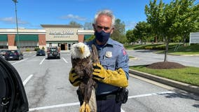Howard County police officer rescues injured bald eagle