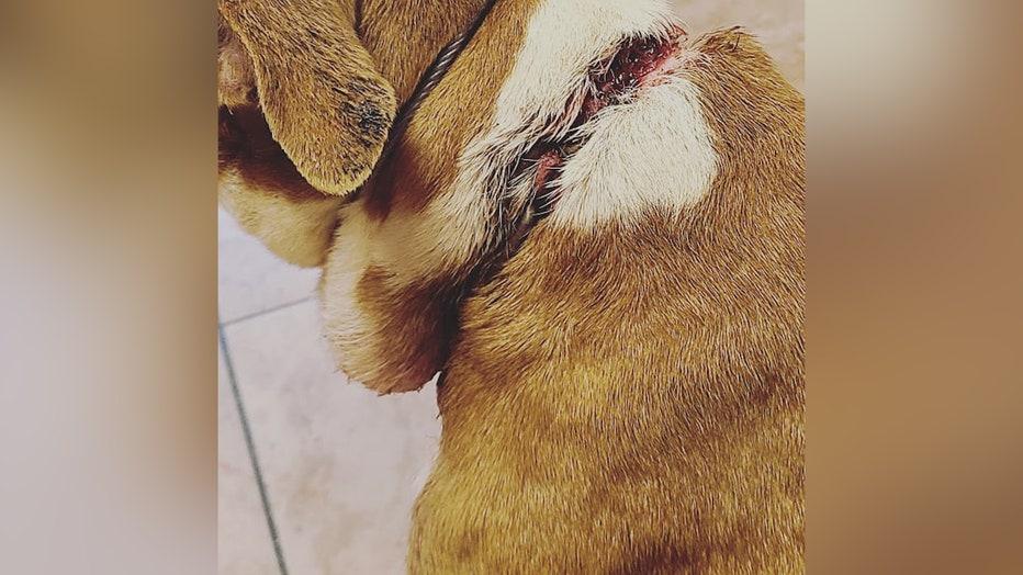 Abandoned-dog-injury.jpg