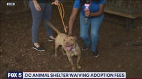 Overcrowded DC animal shelter waiving adoption fees