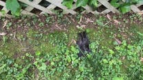 Arlington animal welfare organization asking residents to remove feeders as birds continue to drop dead