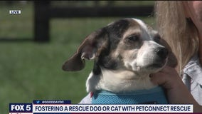 Foster families needed for pets
