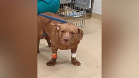 Reward offered for info after dog was stabbed 10 times in Southeast DC