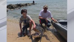 Maryland man captures, kills 7-foot alligator in Chesapeake Bay