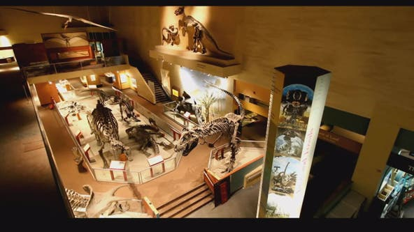 Smithsonian's National Museum of Natural History to reopen June 18