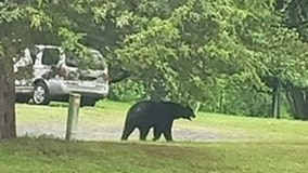 Black bear spotted in backyard of Fauquier County home