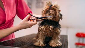 What pet owners need to know about grooming regulations, licensing in the DMV