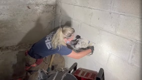 Firefighters rescue dog trapped 5 days in wall of Cincinnati home