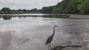 Wildlife and water return to Lake Whetstone after draining accident