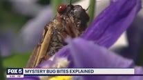 Mystery bug bites on DC residents explained