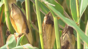 $50,000 reward offered for information on vandalized farm equipment in Montgomery County