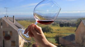 Study: Wine is only alcoholic drink with health benefits — and it may just be the grapes