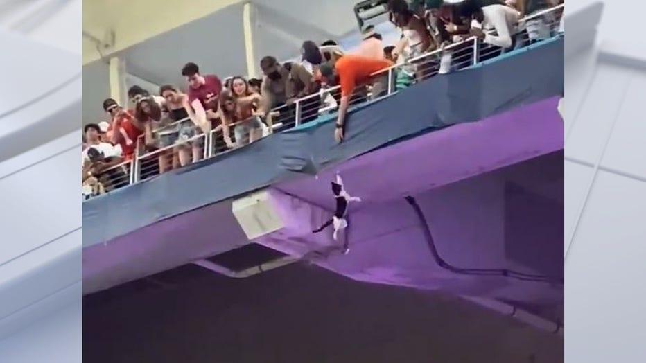 cat falls at stadium