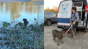 Dog rescued from waist-deep mud near DC's Kingman Island bike trail