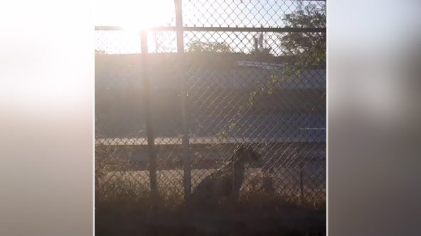 Terrified dog rescued after trapped between fences along I-395 in Arlington County