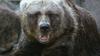 Bicyclist in Alaska gets mauled by 500-pound bear