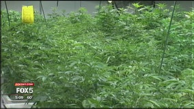 NJ medical marijuana review