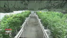 Legal cannabis in New York?