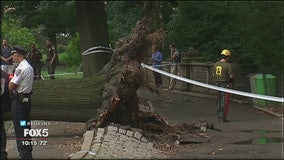 Lawsuit over falling tree