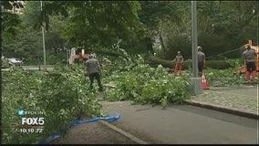 Central Park tree falls on mom, kids