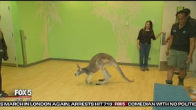 Show pulls back curtain on Bronx Zoo