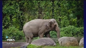 Animal rights supporters fighting to get Bronx Zoo elephant released
