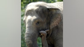 Group calls for ending 'imprisonment' of Bronx Zoo elephant