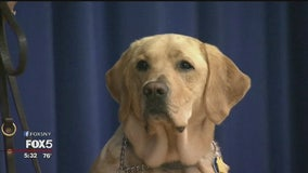 Henry Viscardi School welcomes Long Island's first facility dog
