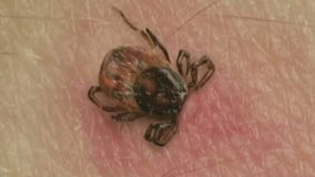Lawmaker: NY should increase funds to fight Lyme Disease