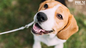 NY Army veteran donates $100,000 to animal shelter he visits weekly