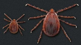 Rapid spread of exotic tick that multiplies without mating may be a threat, CDC says