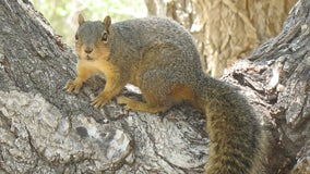 Squirrel causes power outage in South Carolina capital city