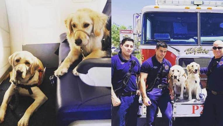 52e5fe6f-KSAZ service dogs go to el paso_1565191743776.jpg-408200.jpg