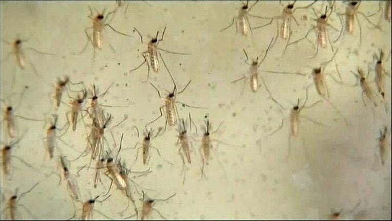 West Nile mosquitos-409650-409650