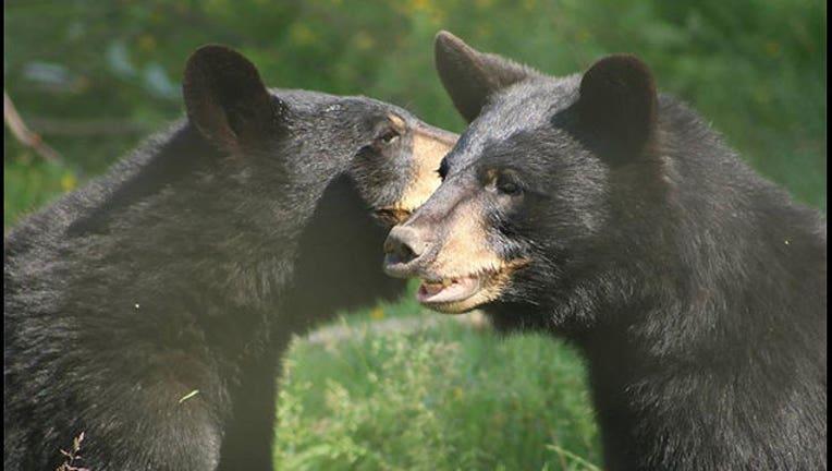 a22b6ff4-bears-vancouver-zoo_1565118684722.jpg