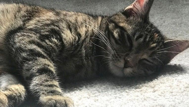 21fe4321-cat kitty_1559669882200.png-402429.jpg