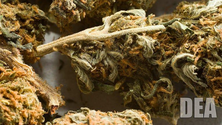 Dried marijuana