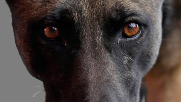 police-dog640_1471609835462.jpg