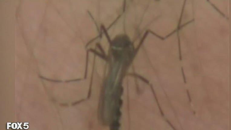 Zika, FILE