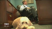 Diabetic-alert dog accompanies Long Island judge to court