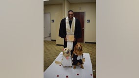 Wedding held for therapy dogs at North Texas hospital